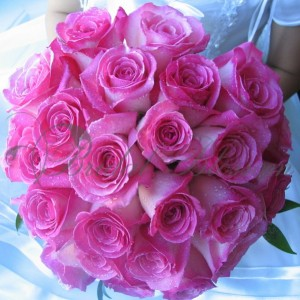 142 Pink roses
